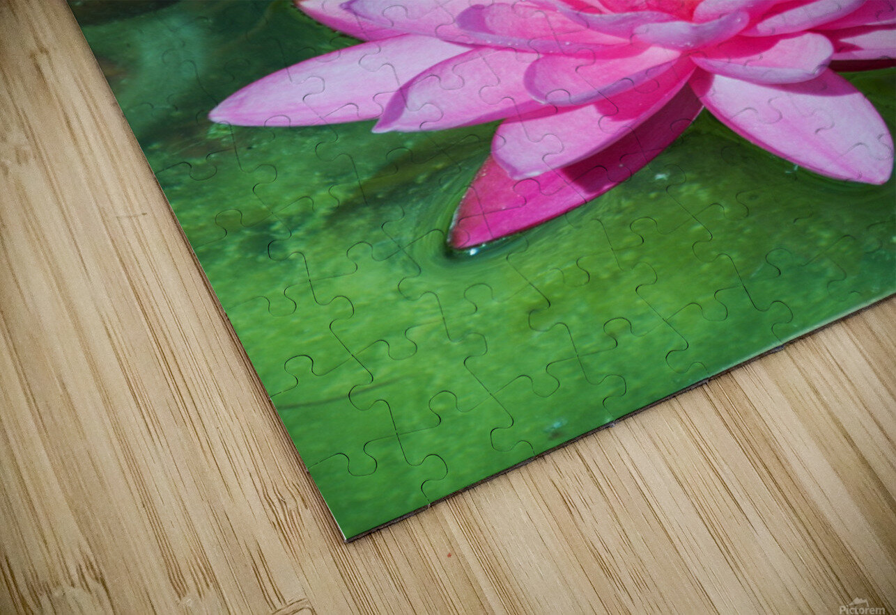 In the pond HD Sublimation Metal print