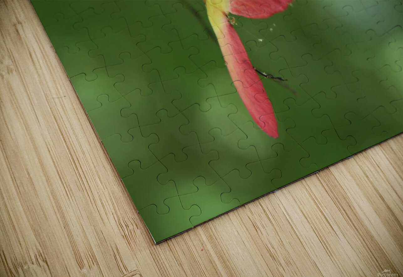 Japanese Maple Seed HD Sublimation Metal print