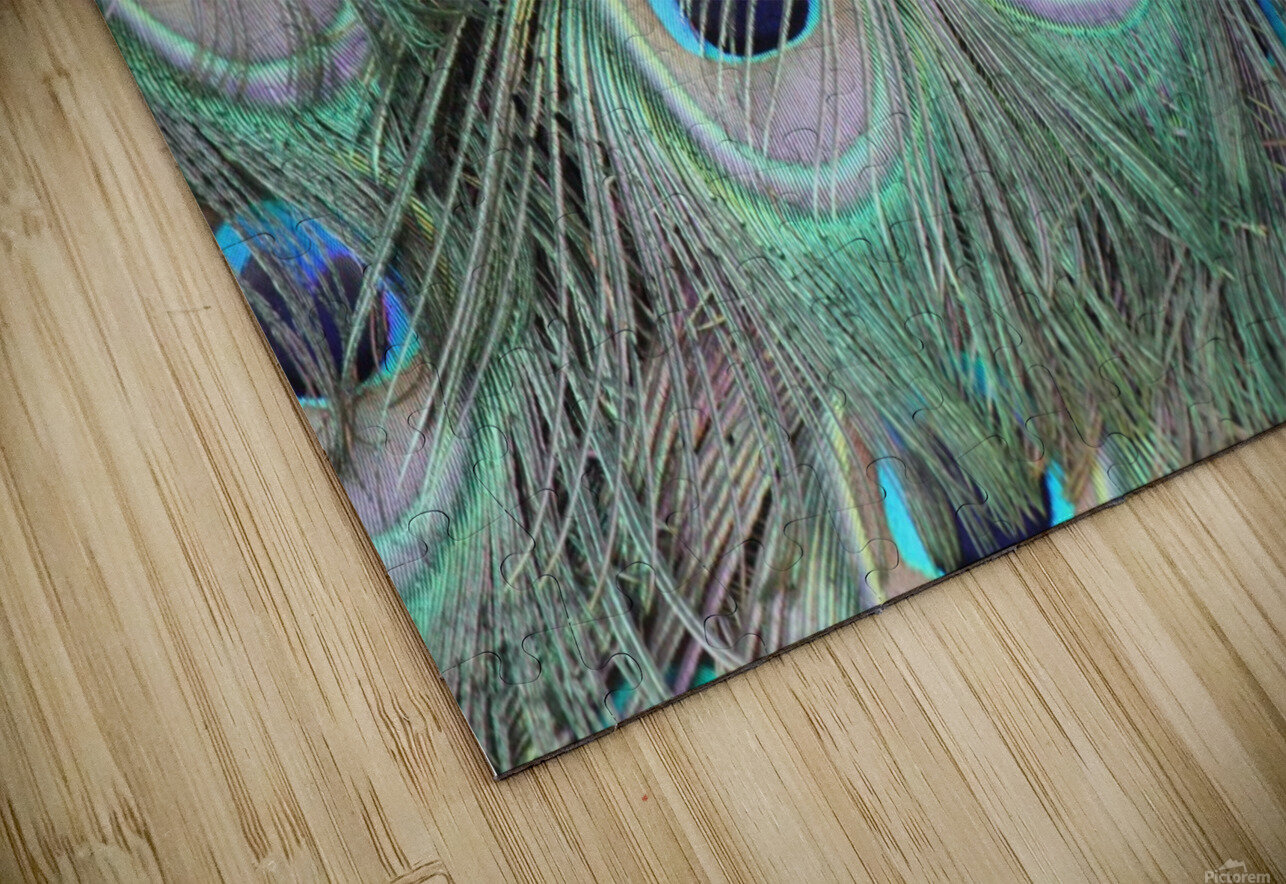 peacock feather pattern plumage HD Sublimation Metal print