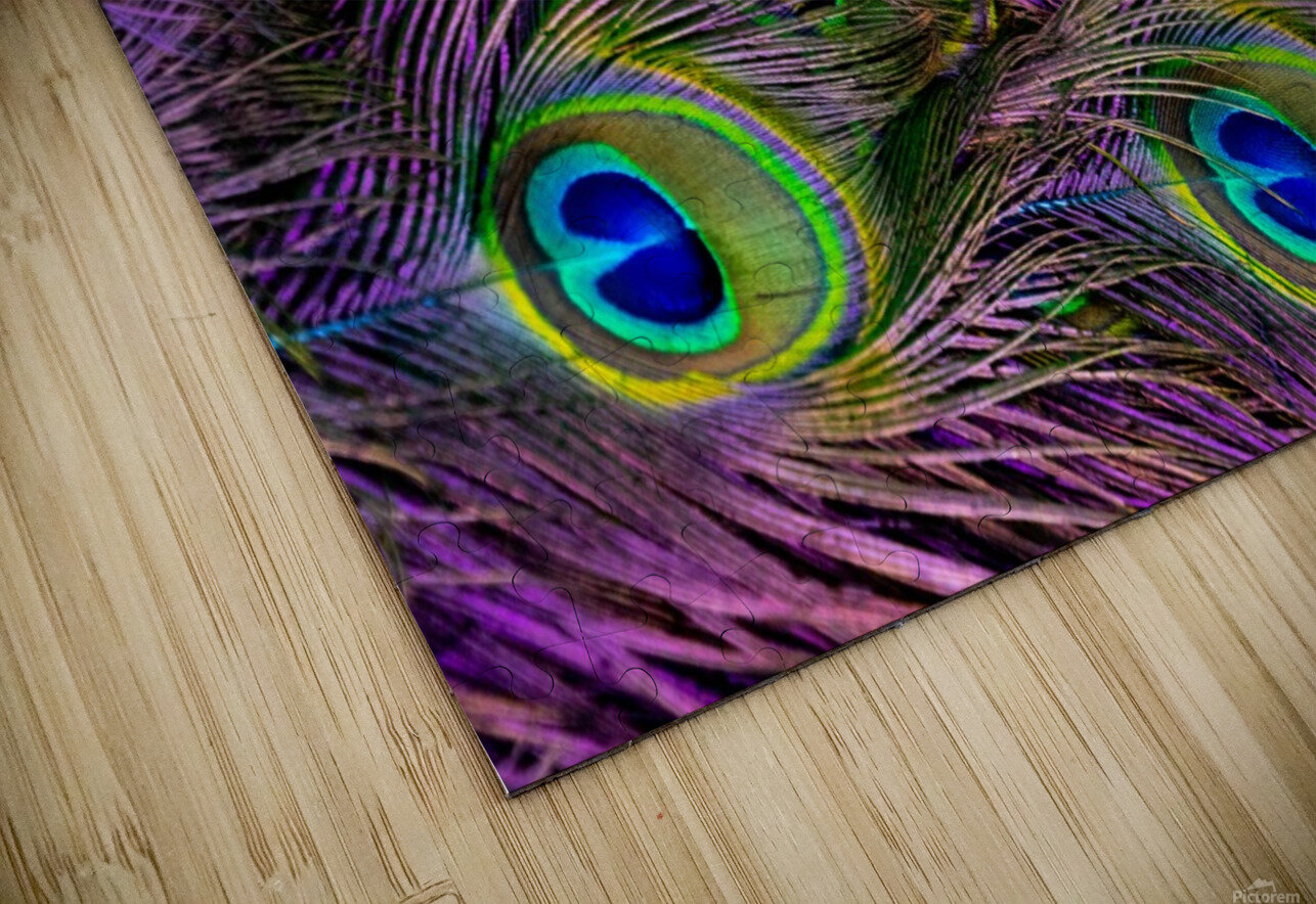 green purple and blue peacock feather digital wallpaper HD Sublimation Metal print