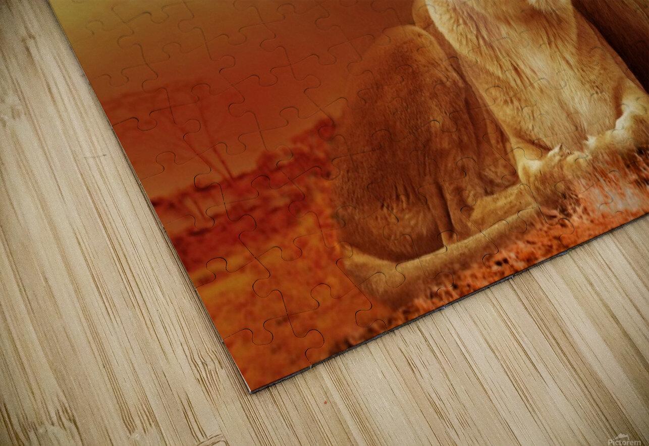 lion safari africa landscape HD Sublimation Metal print