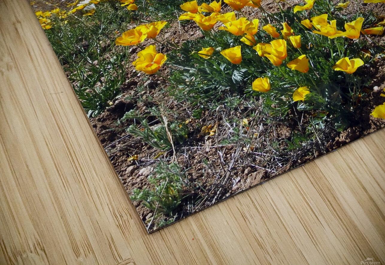 April at Aquirre Springs HD Sublimation Metal print