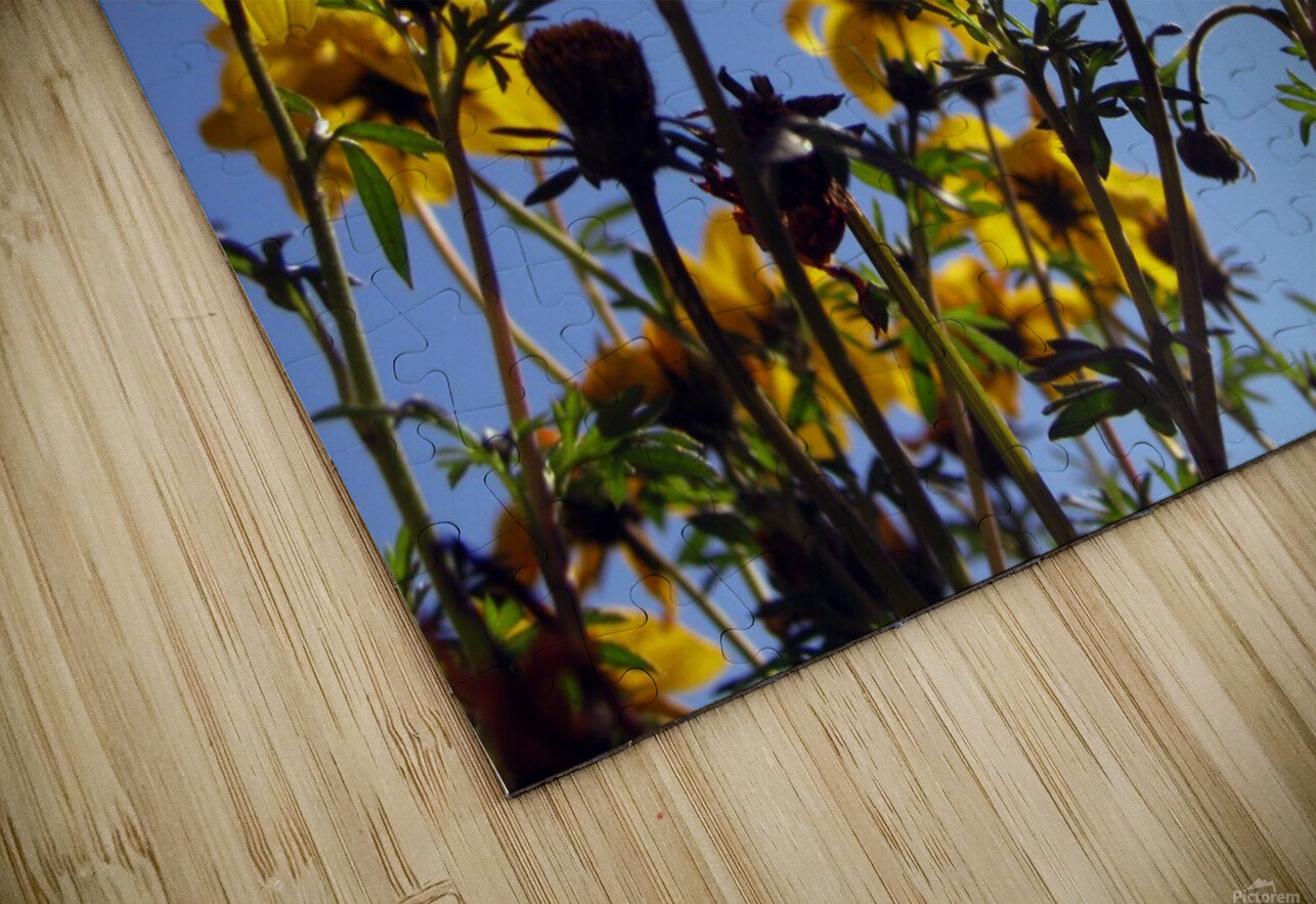 Summer Sky Flowers 1 HD Sublimation Metal print