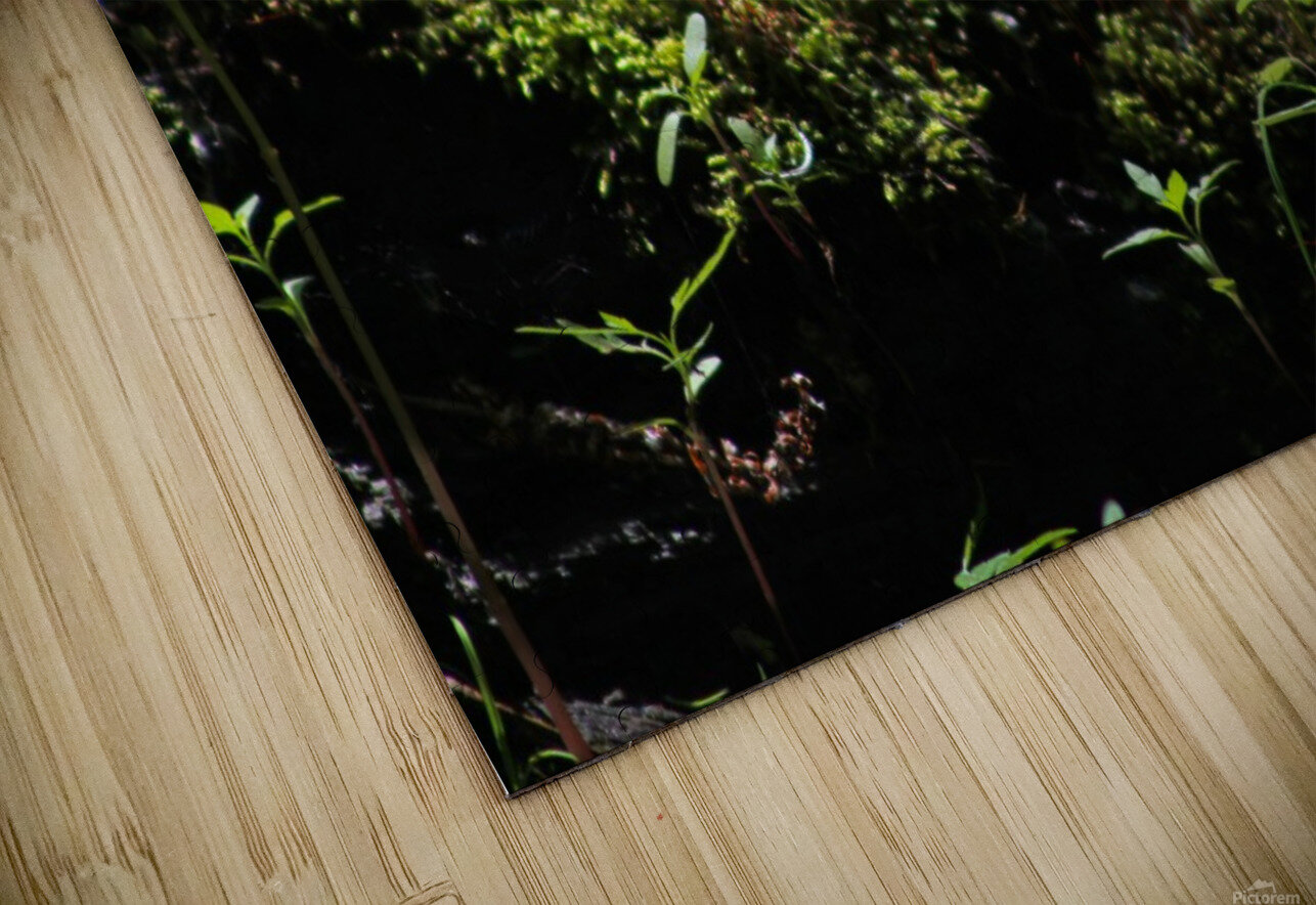 Beautiful Moss HD Sublimation Metal print
