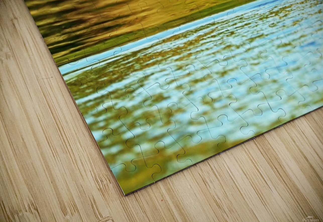 Merganser In Setting Sun HD Sublimation Metal print