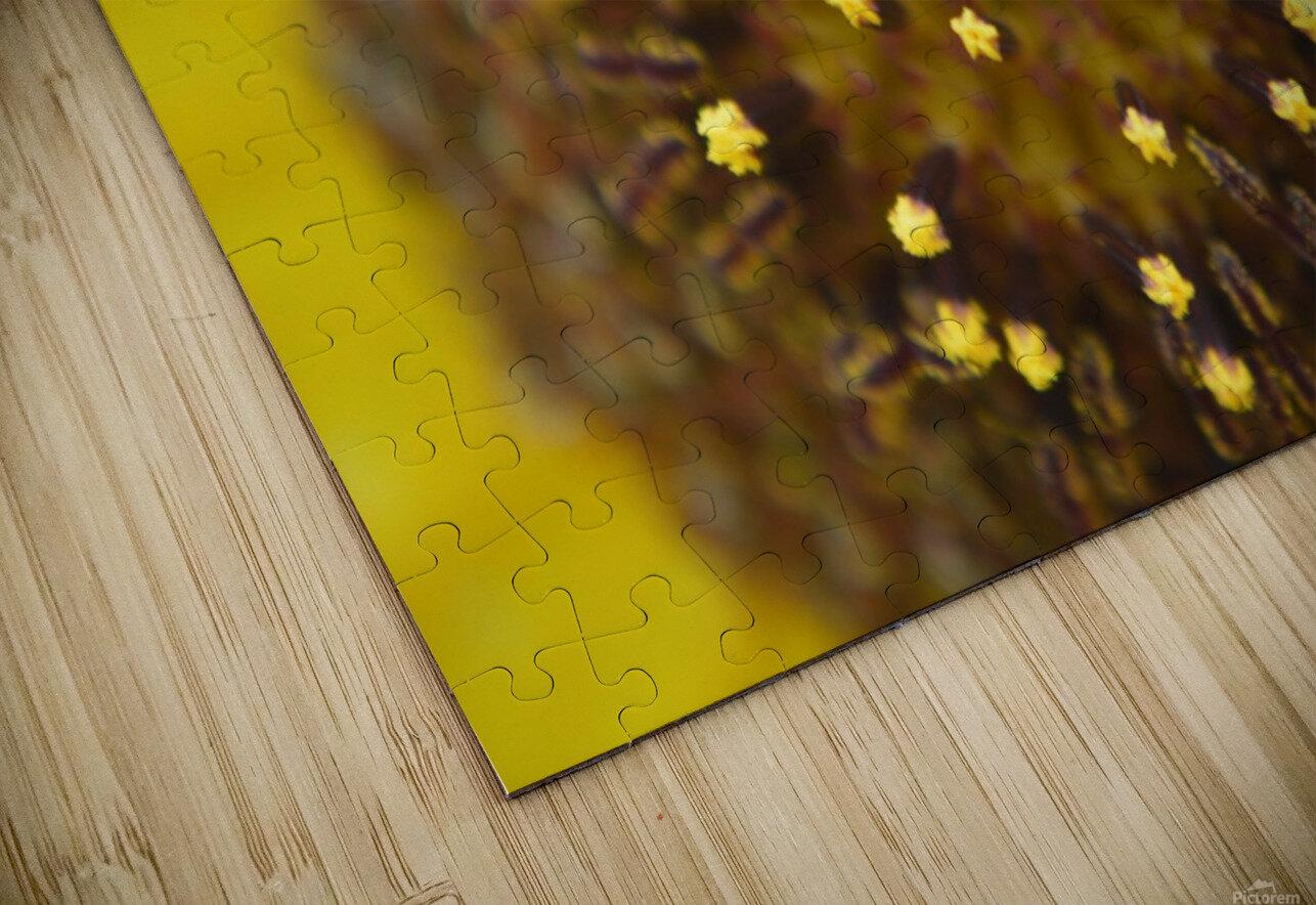 Sunflower Stars HD Sublimation Metal print