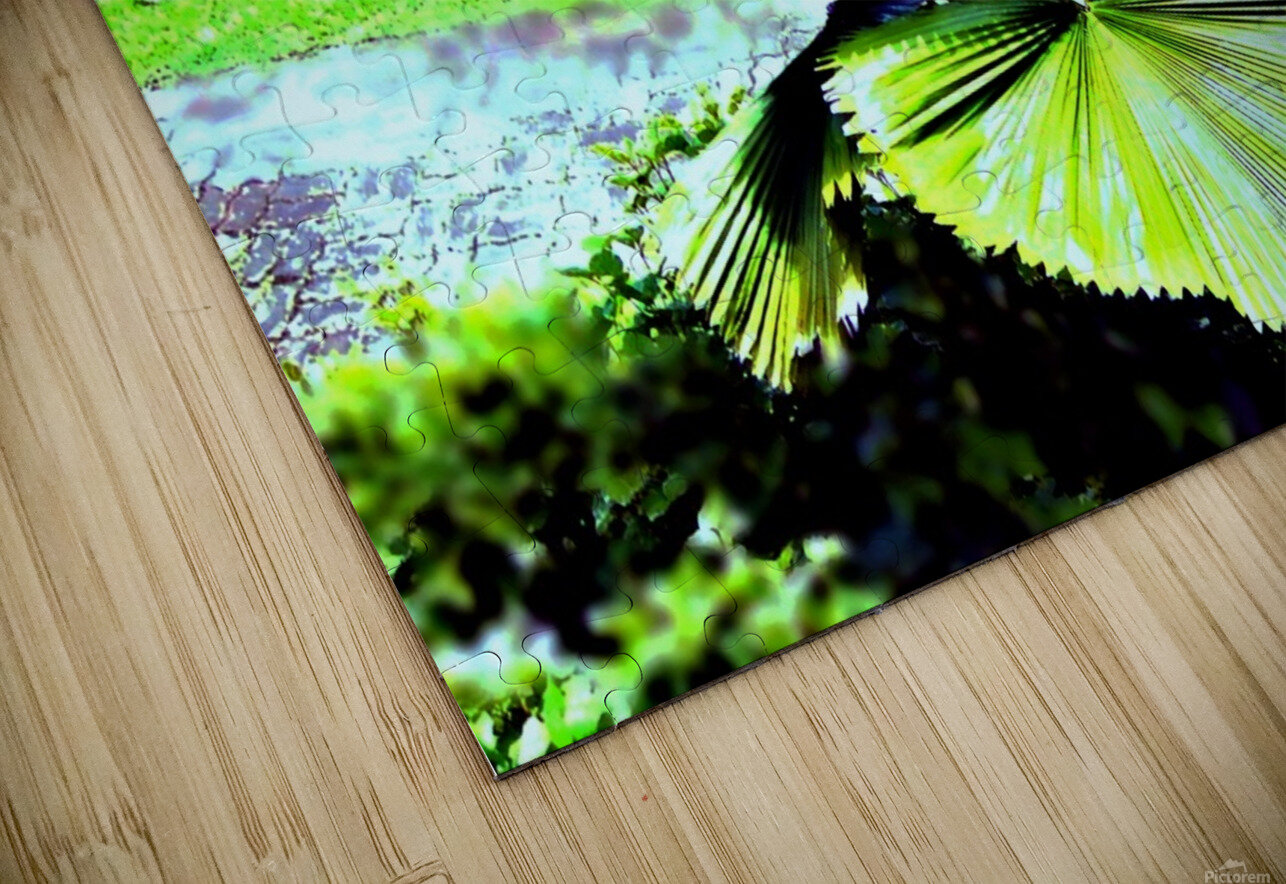 BO902 - Licuala peltata Leaves HD Sublimation Metal print