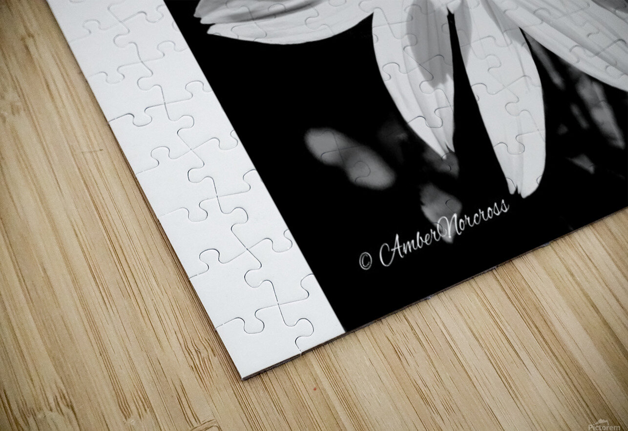 Daisy in bw HD Sublimation Metal print