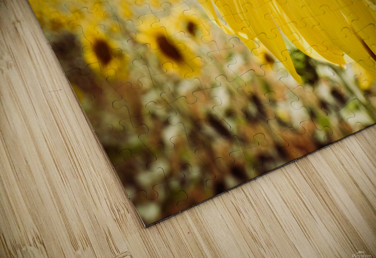 Sunflower with Bee HD Sublimation Metal print