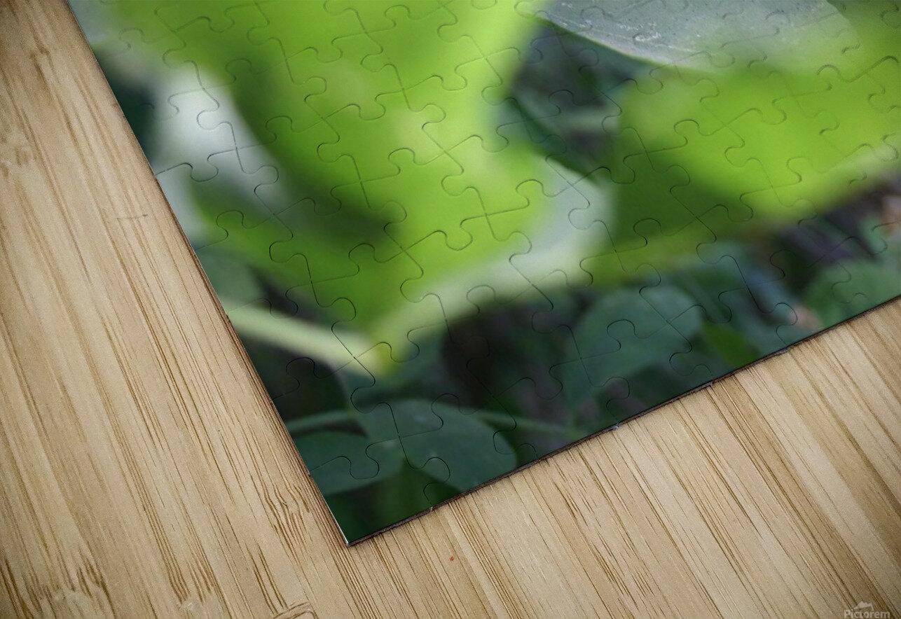 blur leaf HD Sublimation Metal print
