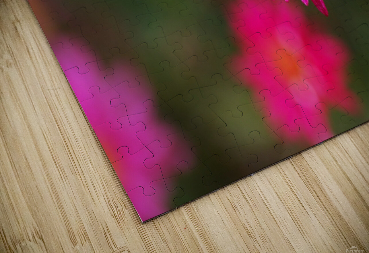 Hot Pink Small Daisy HD Sublimation Metal print