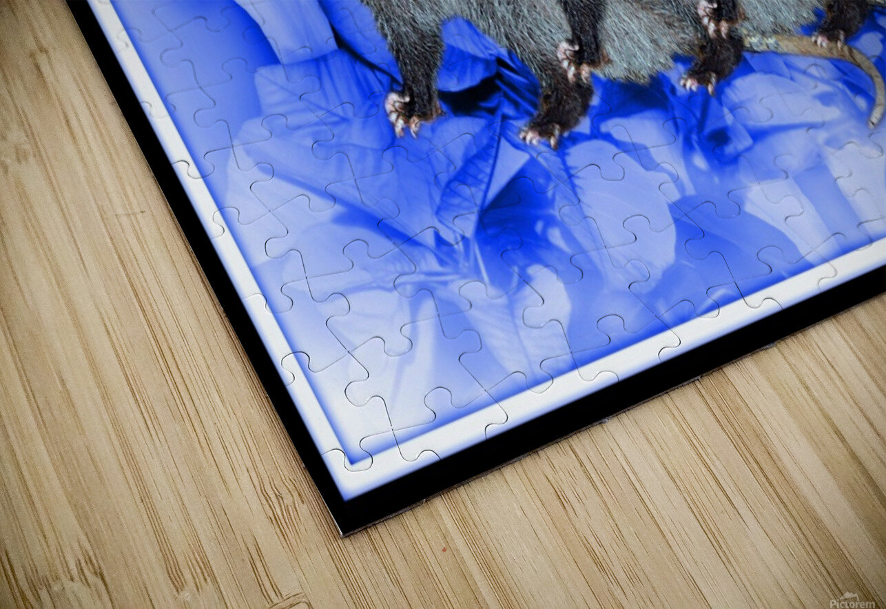 Party Of Possums HD Sublimation Metal print