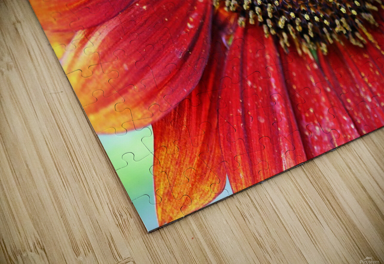 Red Sunflower With Yellow Tips HD Sublimation Metal print