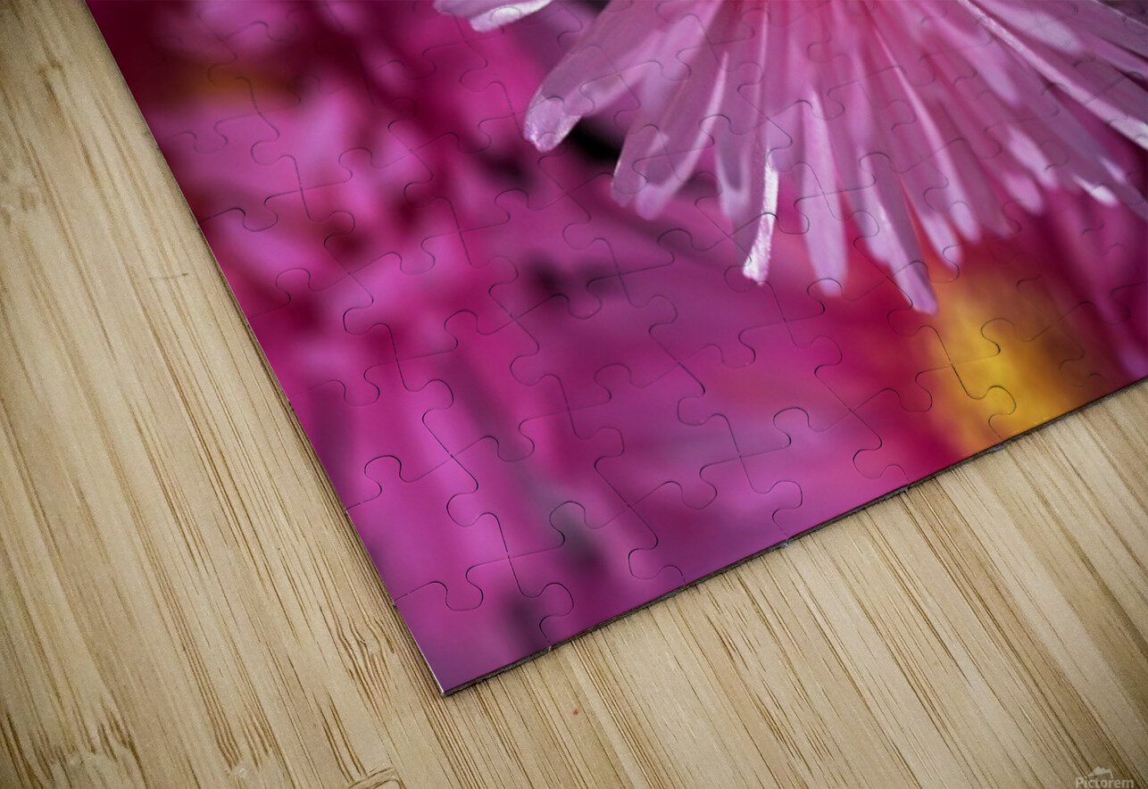 Pink Ice Plant Flowers HD Sublimation Metal print