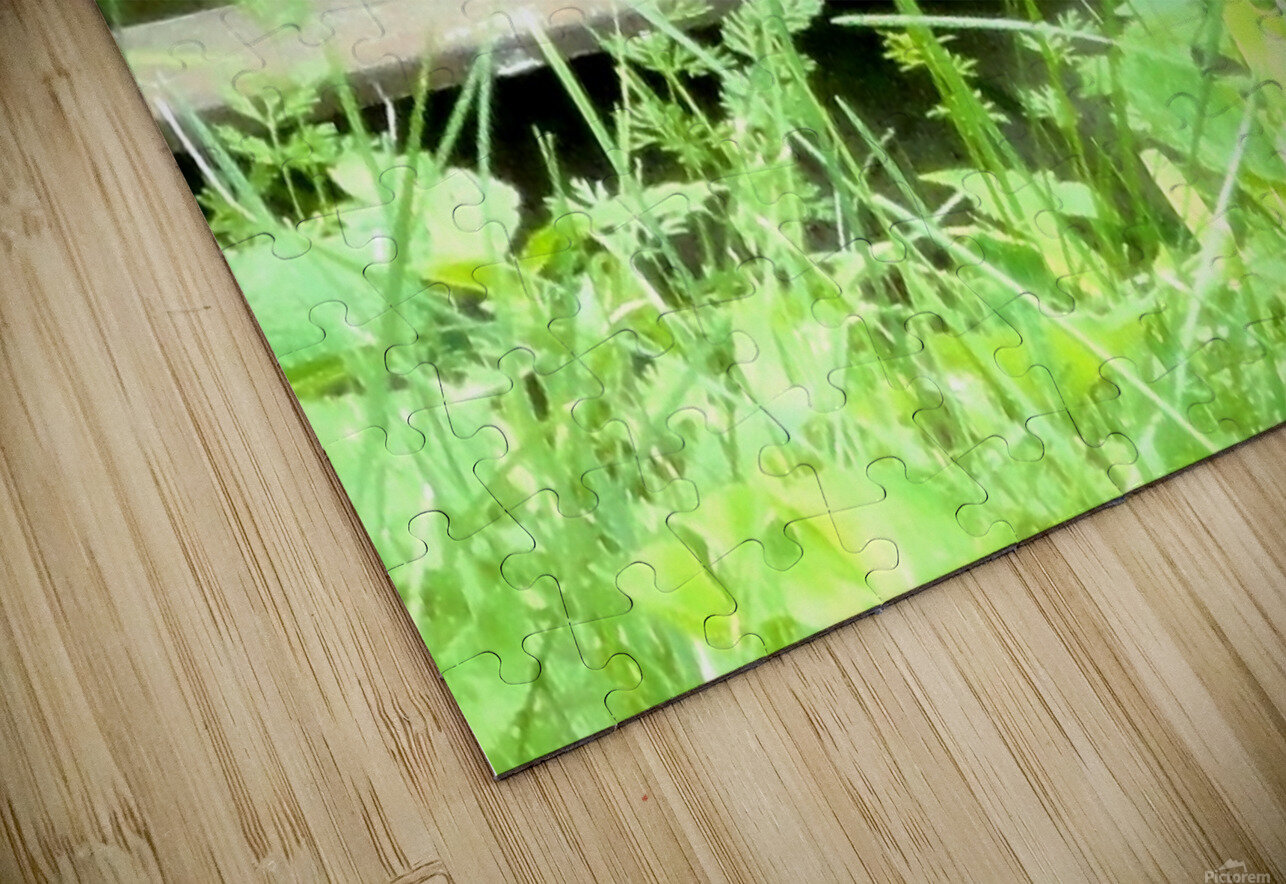 20190916_180230 HD Sublimation Metal print