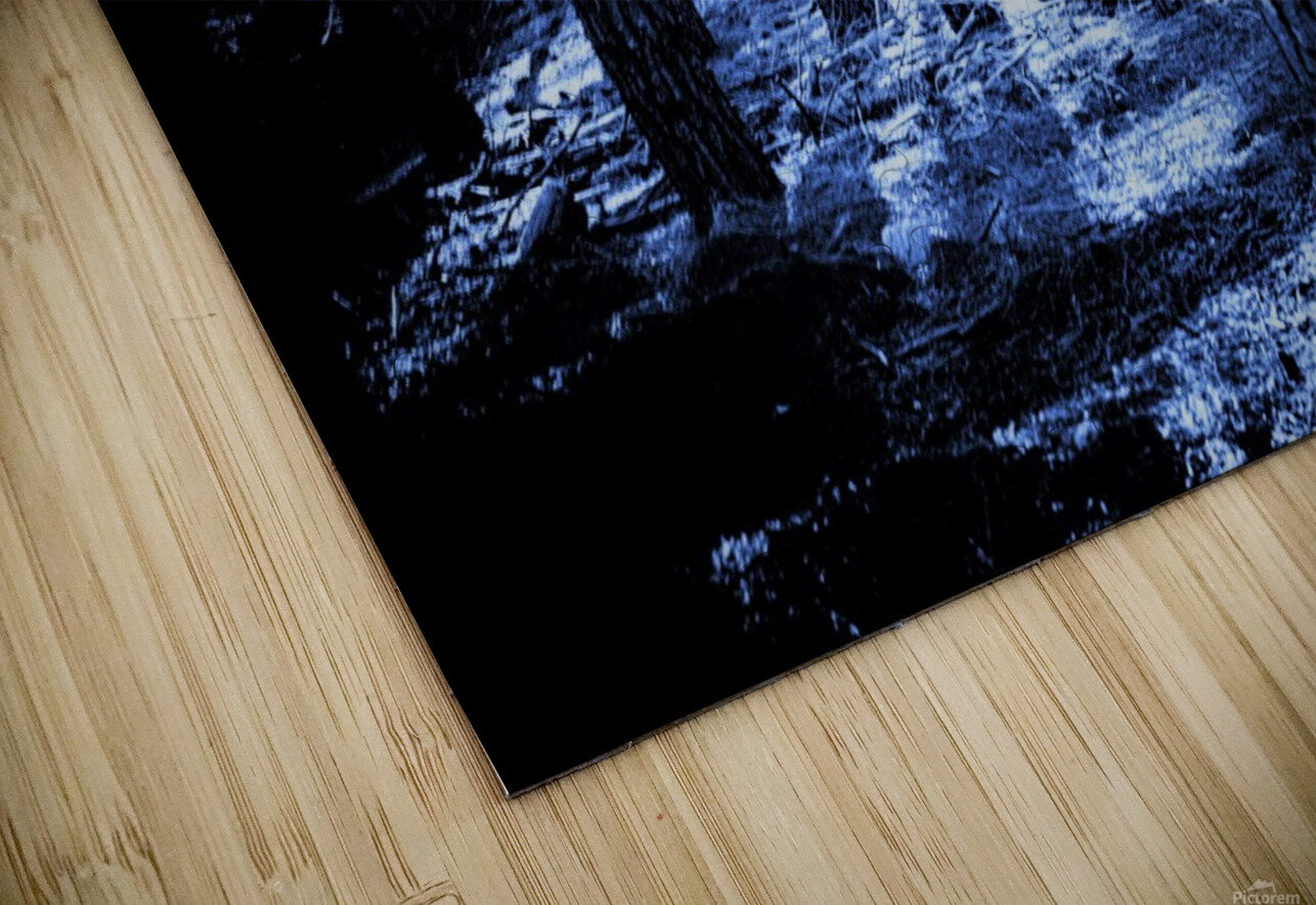 Mysterious Forest HD Sublimation Metal print