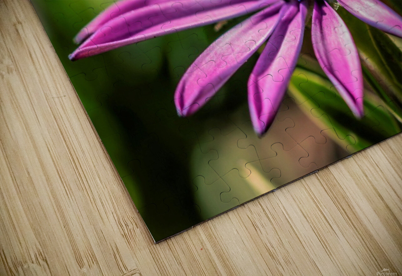 Daisy in Pink HD Sublimation Metal print