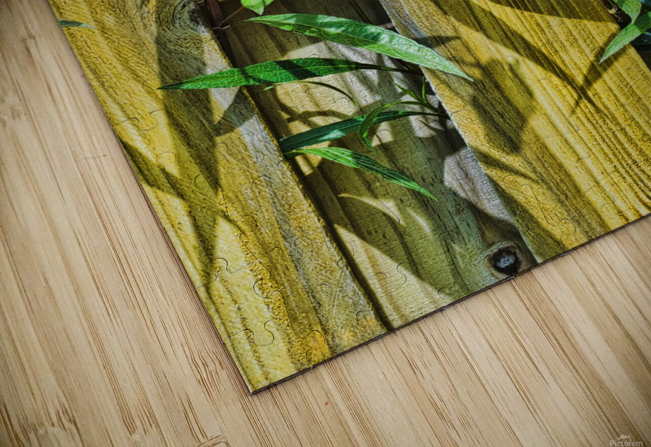 Fence Flowers 1 HD Sublimation Metal print