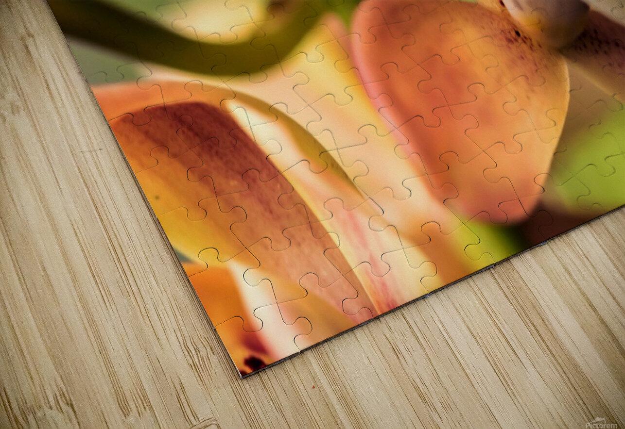 Blush Orchids HD Sublimation Metal print