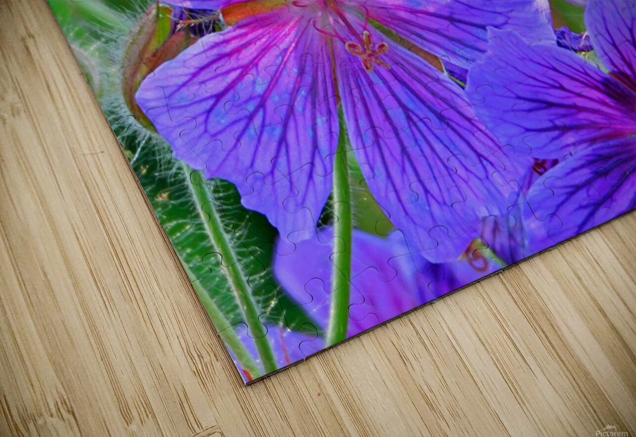 bee  HD Sublimation Metal print