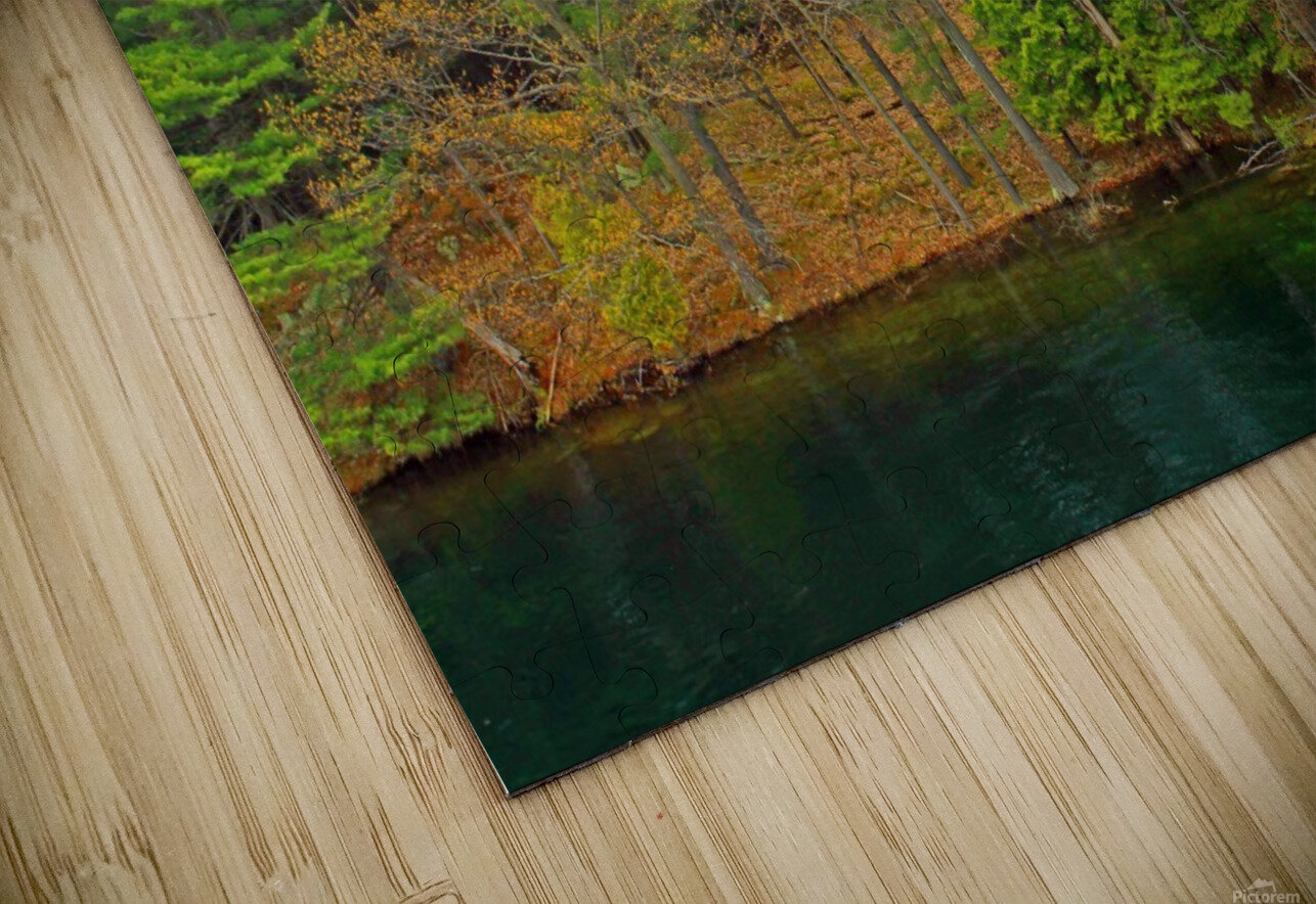 Lively Trees HD Sublimation Metal print