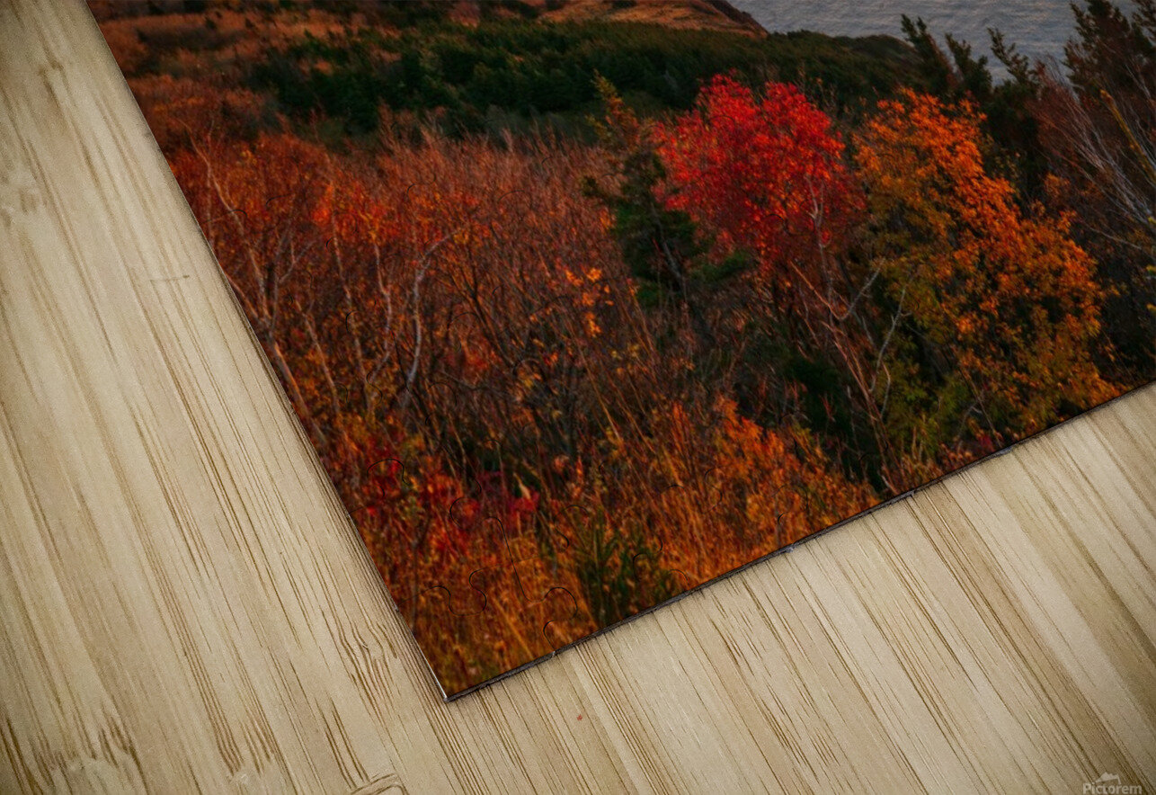 Autumn Glory HD Sublimation Metal print