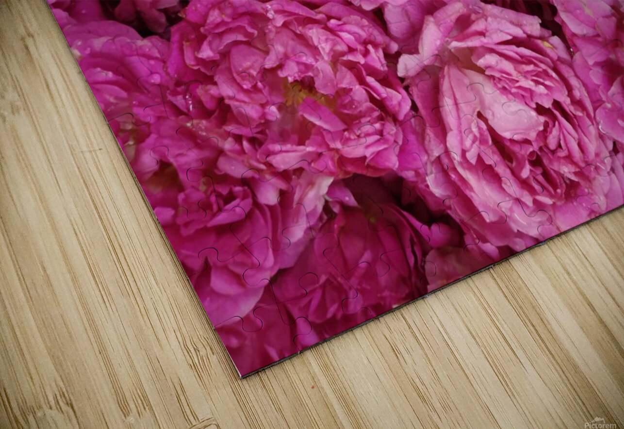 ROSE GARDEN   HD Sublimation Metal print