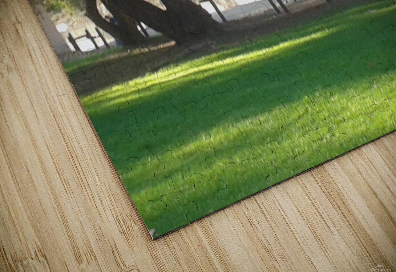 Horses at the park summertime  HD Sublimation Metal print