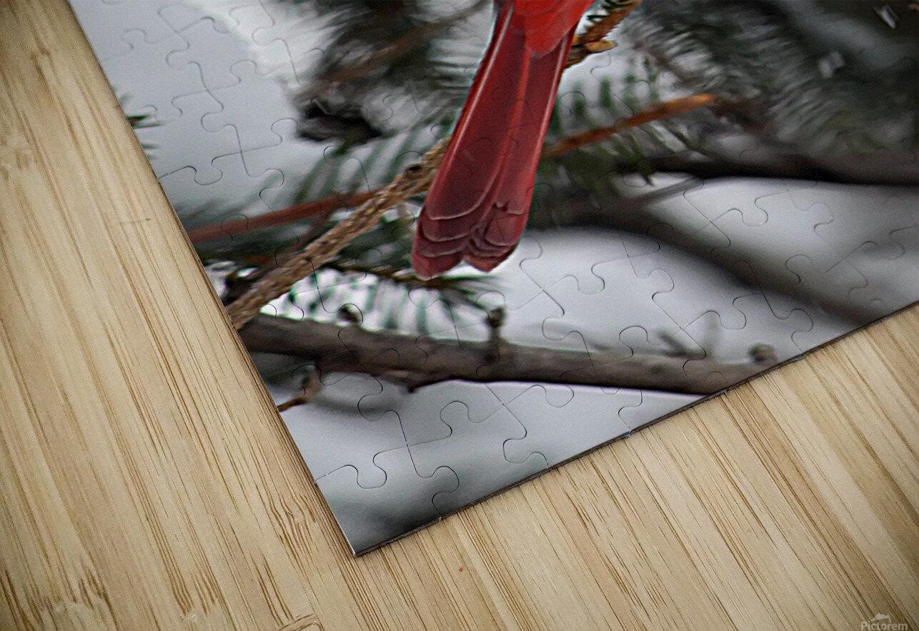 Vertical Cardinal HD Sublimation Metal print