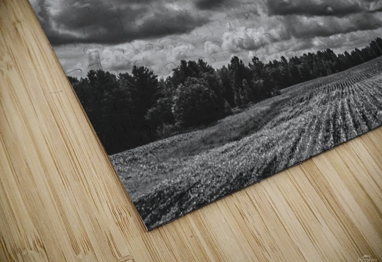 Corn Field HD Sublimation Metal print