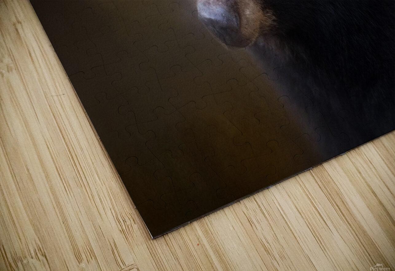 Black Bear Portrait HD Sublimation Metal print