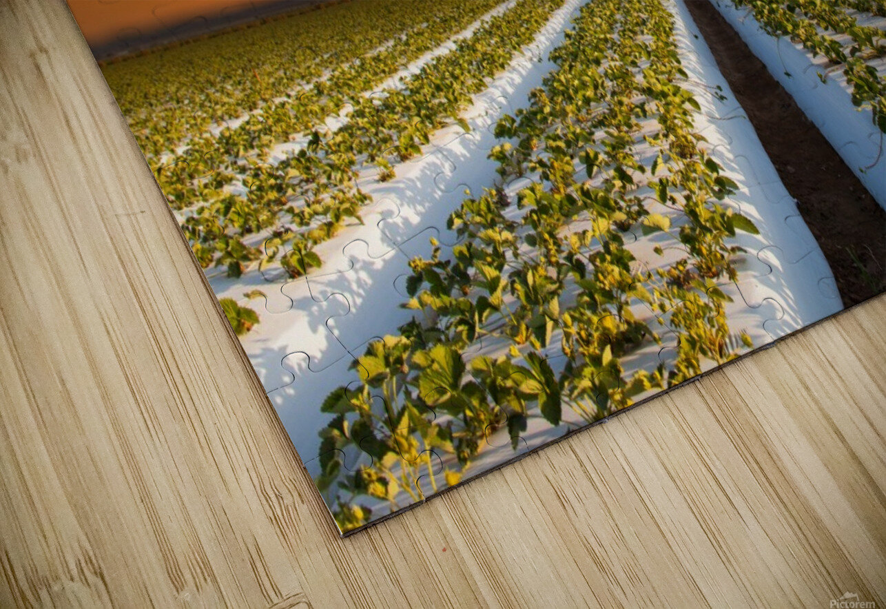 Strawberries in making HD Sublimation Metal print