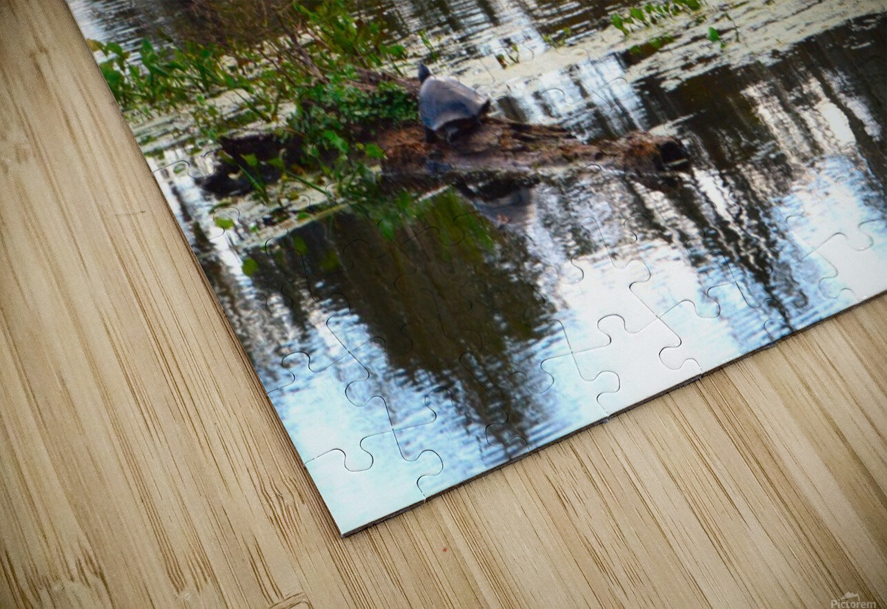 Turtle Territory   HD Sublimation Metal print