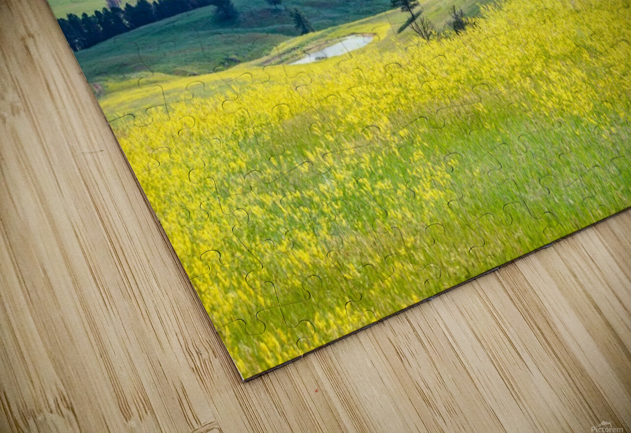Custer State Park Yellow HD Sublimation Metal print