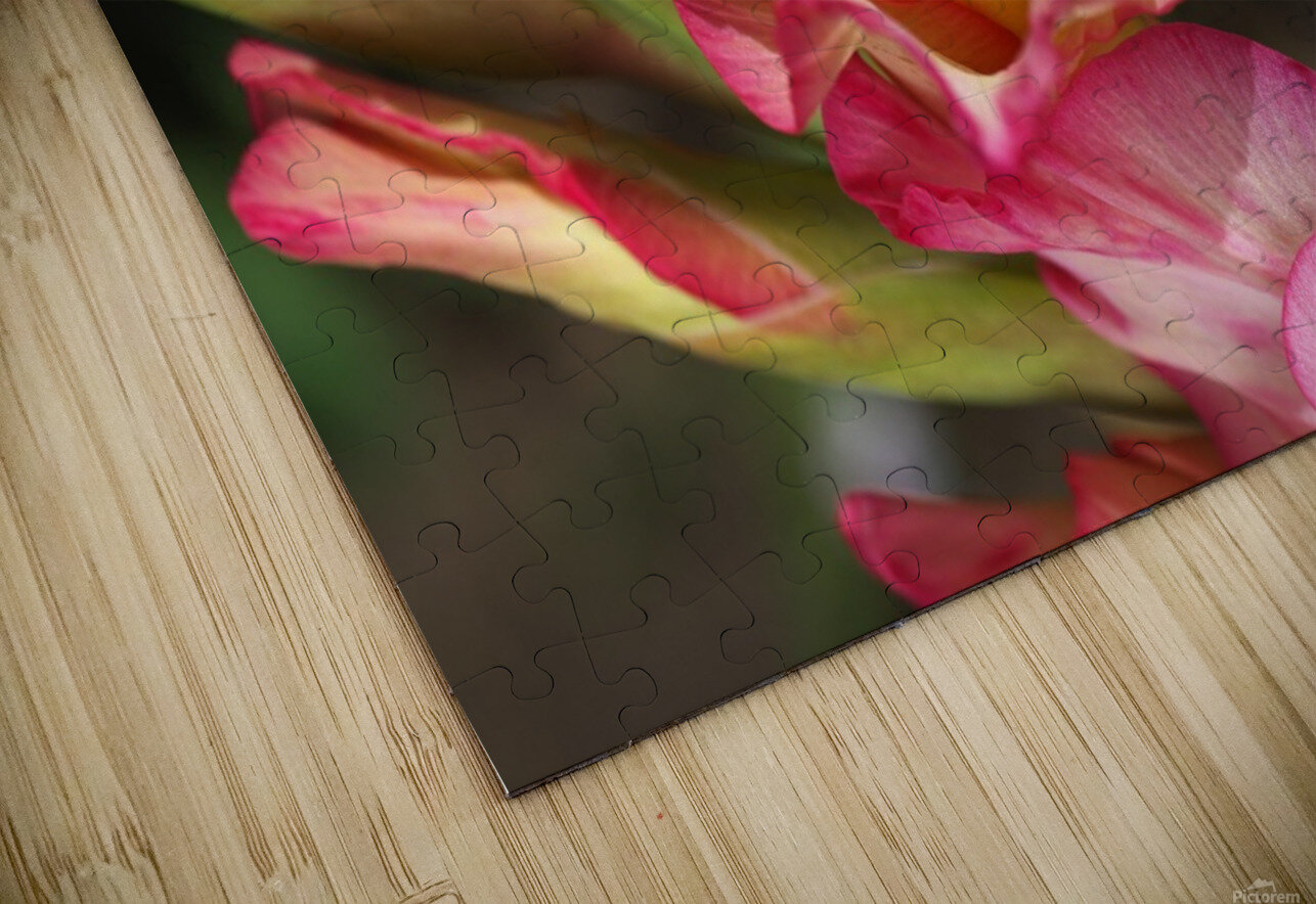 Gladiolus Display HD Sublimation Metal print