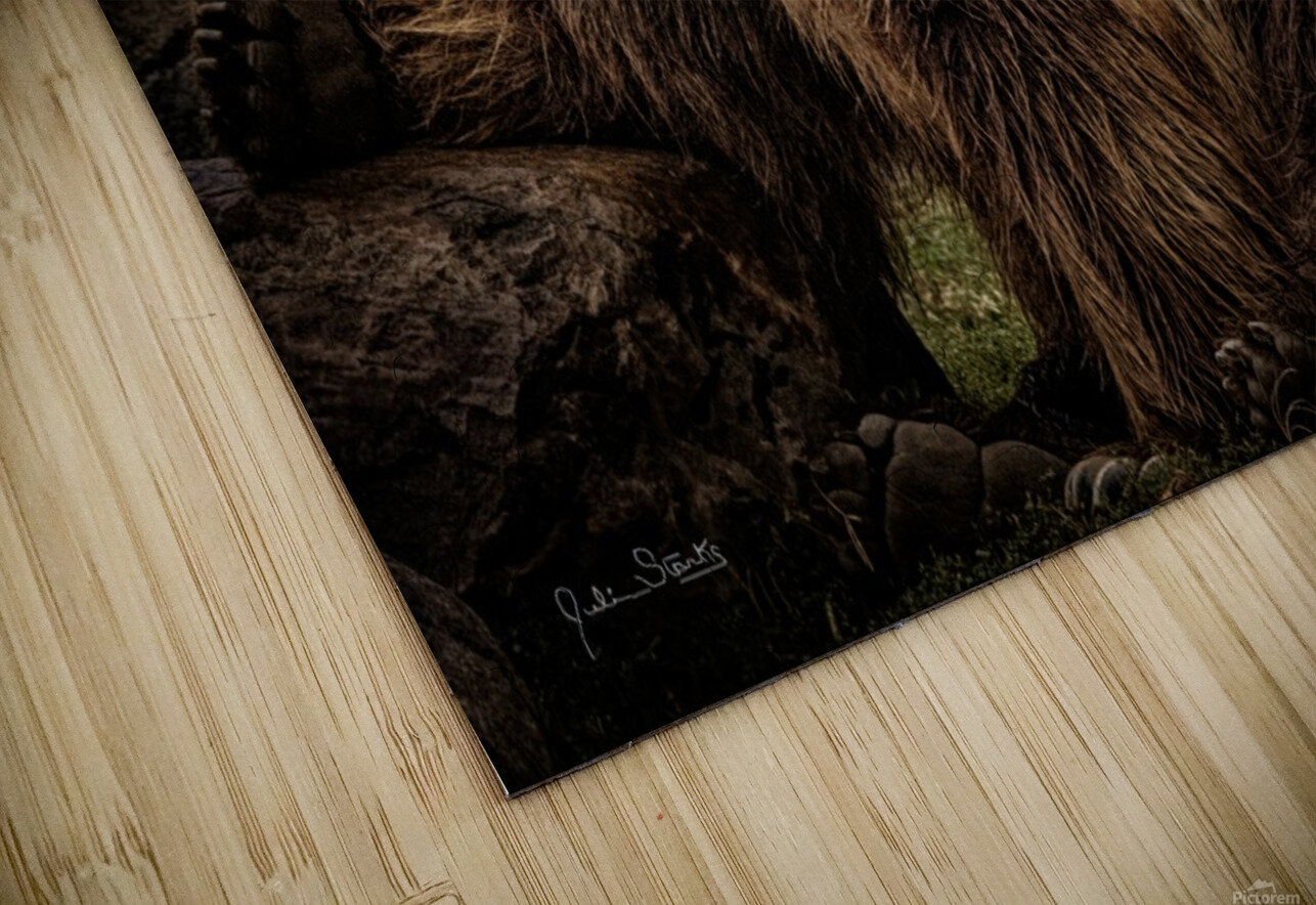 Brown Bear Brothers HD Sublimation Metal print