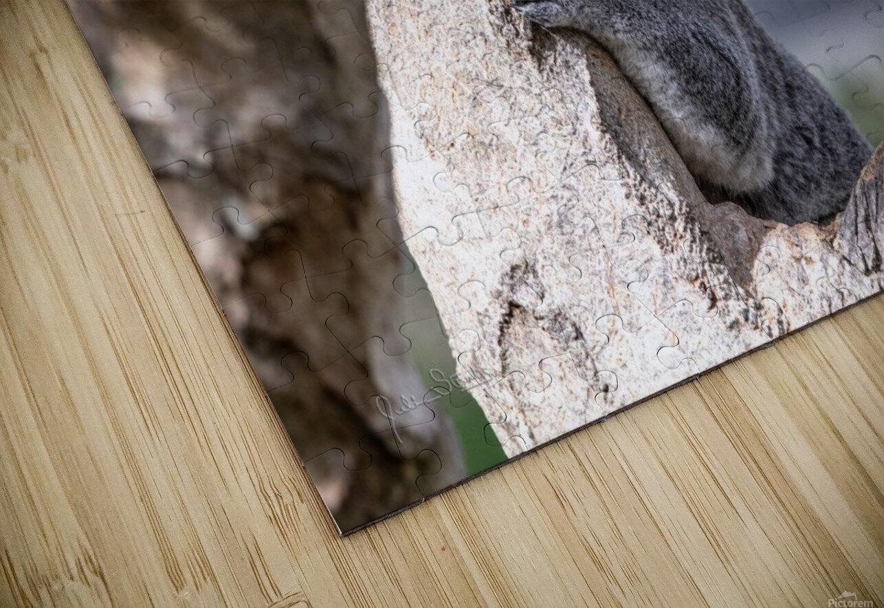 Australias Own Koala Bear HD Sublimation Metal print