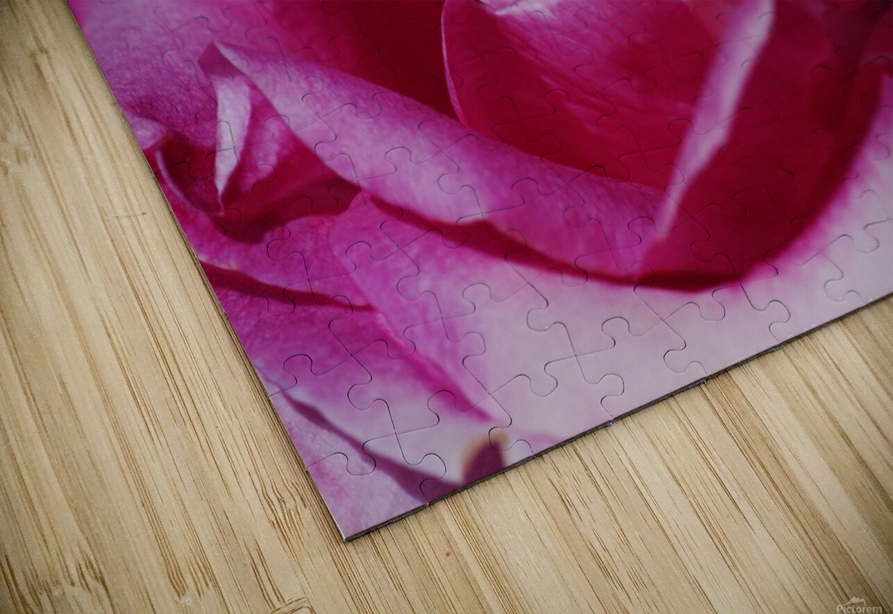 Heart Of Pink Rose HD Sublimation Metal print