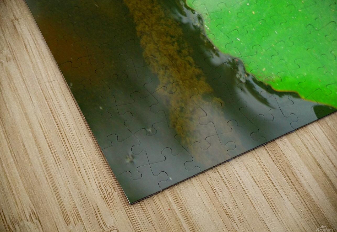 Lily Pad HD Sublimation Metal print