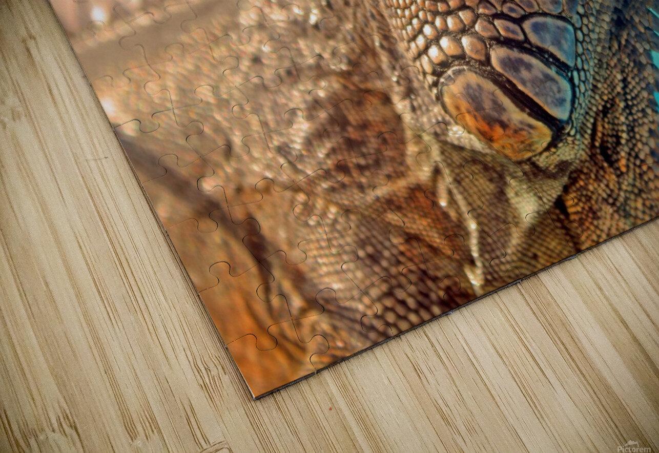 Spiny-Tailed Iguana HD Sublimation Metal print