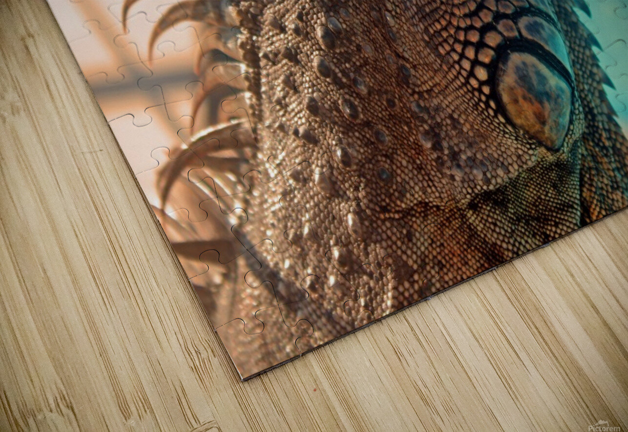 Looking into the Distance HD Sublimation Metal print