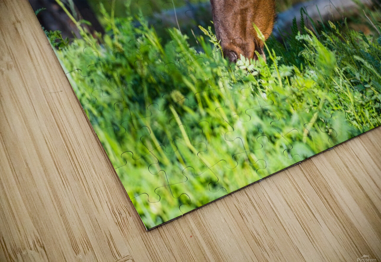 Baby Elk HD Sublimation Metal print