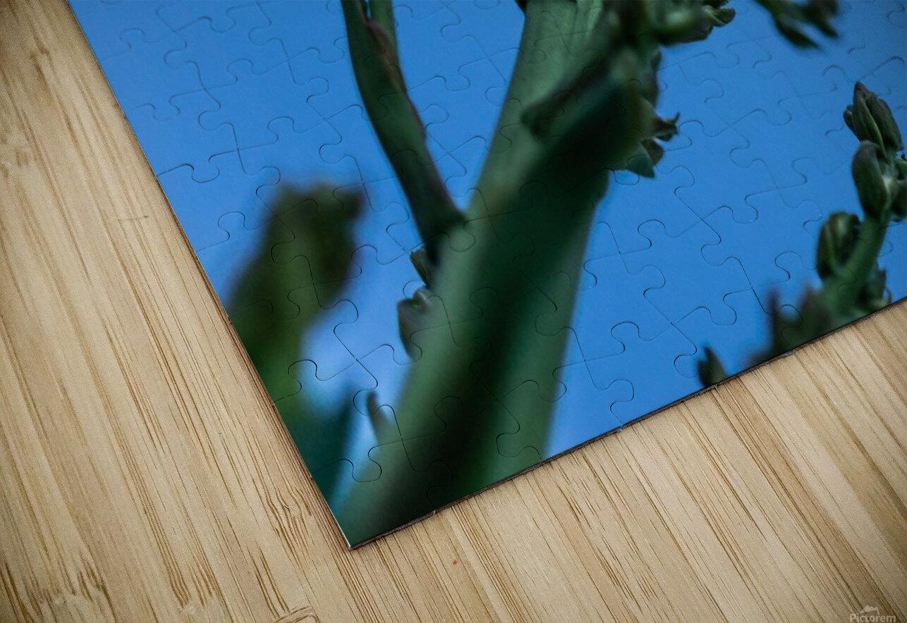 Yucca Skies HD Sublimation Metal print