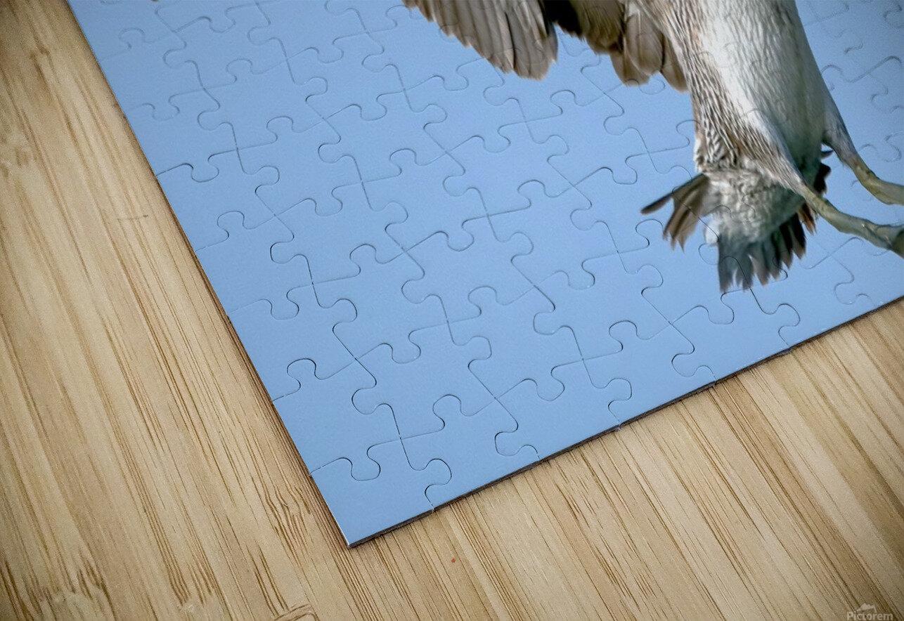 Arriving: Brown Pelican  2509 HD Sublimation Metal print