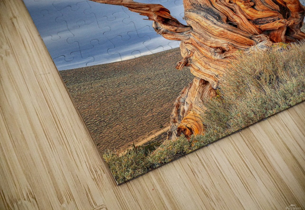 Great Witness of Time HD Sublimation Metal print