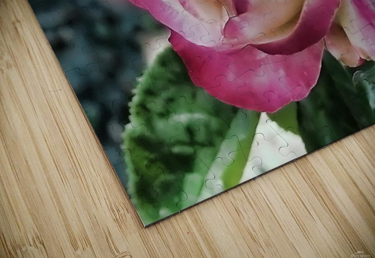 Lavender Rose HD Sublimation Metal print