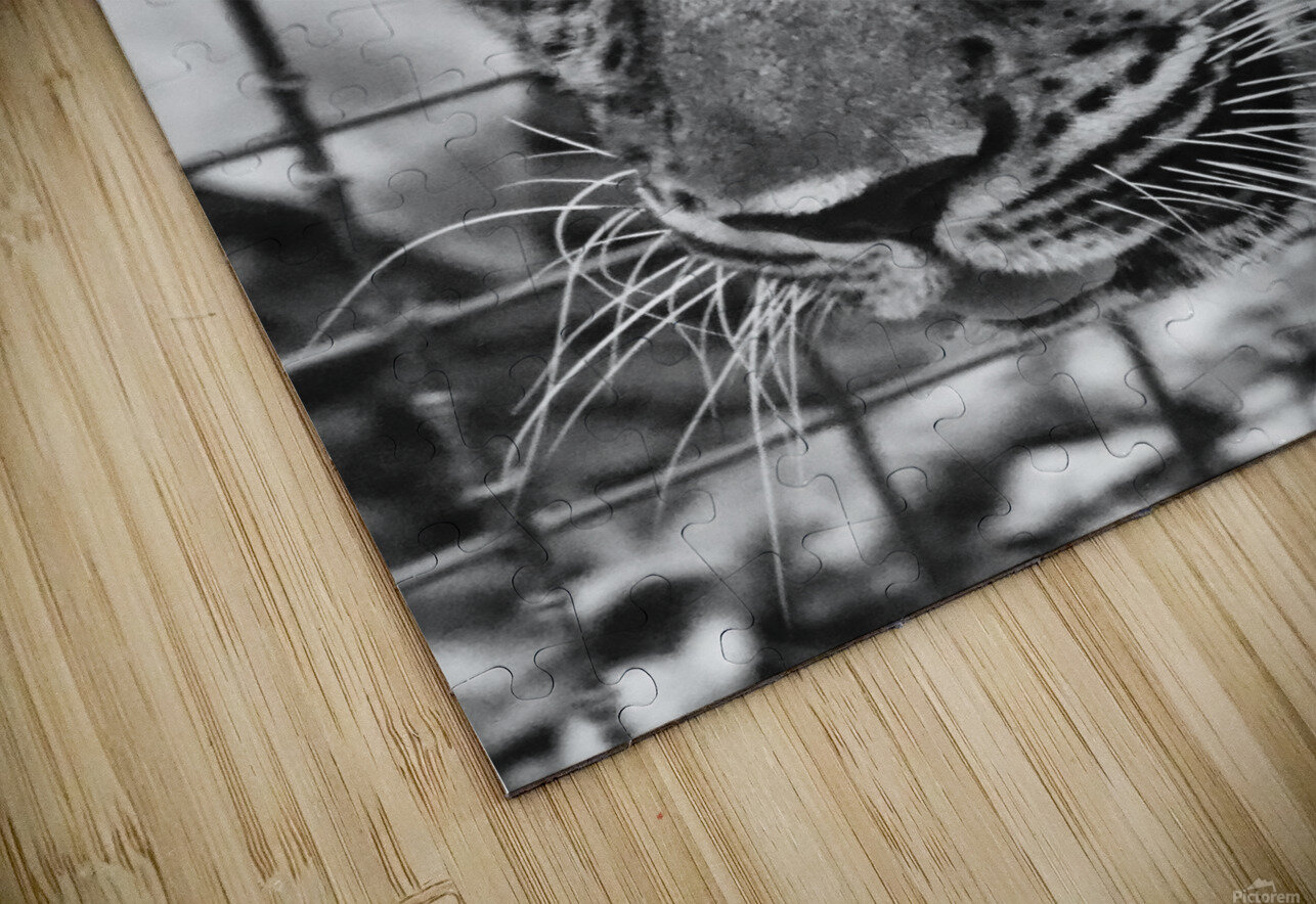 Leopard in Black & White HD Sublimation Metal print