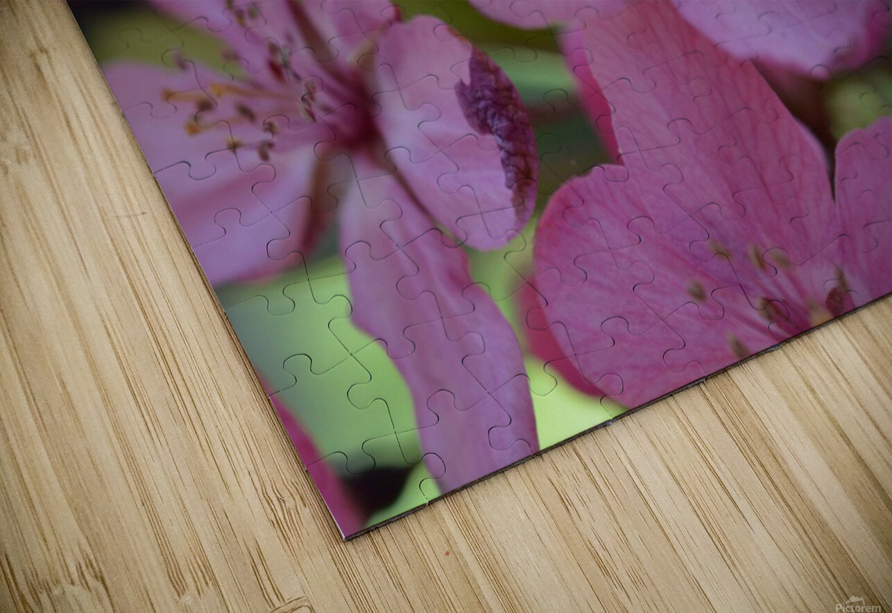 Floral Photography  HD Sublimation Metal print