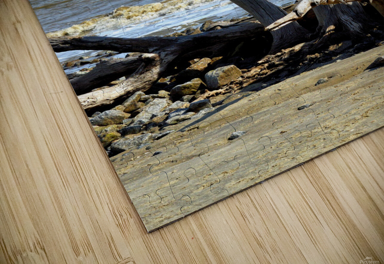 Driftwood Beach Uplifting HD Sublimation Metal print