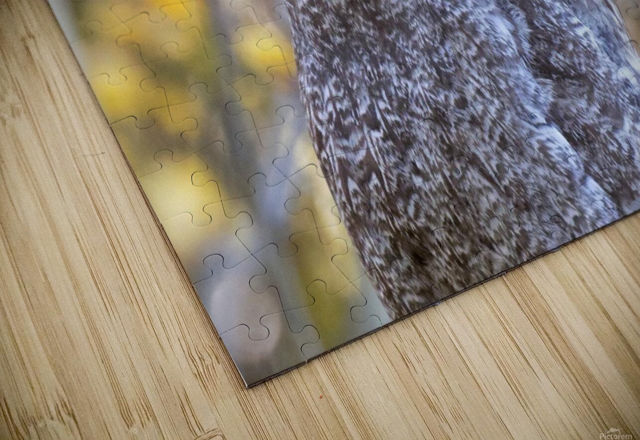 Owls HD Sublimation Metal print